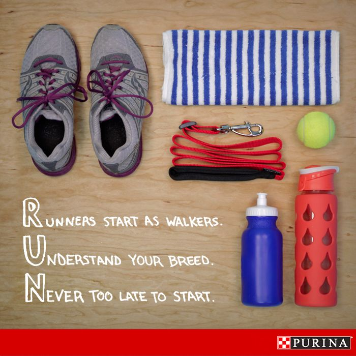 Make your dog your favorite workout buddy! These tips can make running with your dog easy and fun!