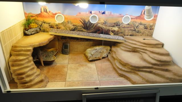Ideal (and not ideal) Substrate and Digging Materials For Bearded Dragons- Love this set up and the dig box!