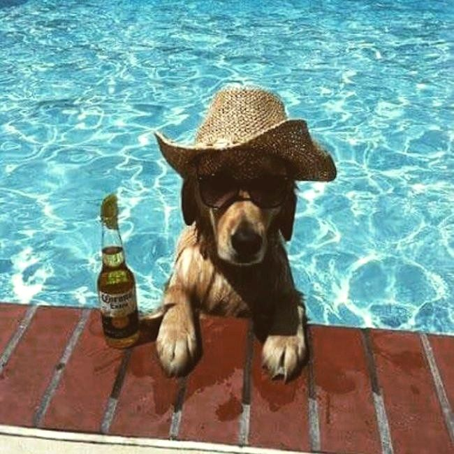 137 best images about drunk animals on pinterest for Animaux gonflable piscine