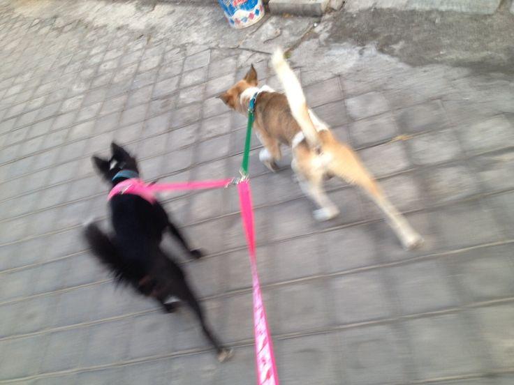 仲良し散歩〜