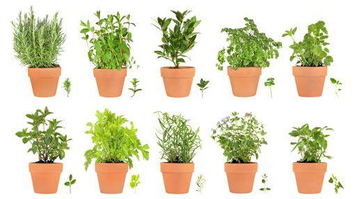 I like herbs