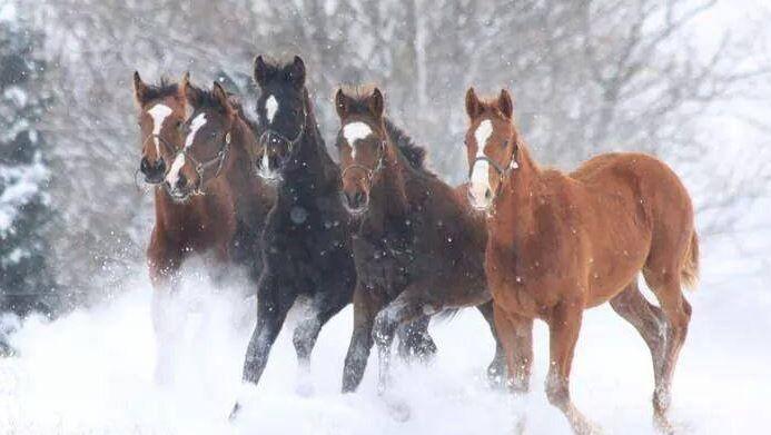 my friend's beautiful horses