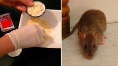 Cómo acabar definitivamente con los ratones en nuestra casa de manera natural
