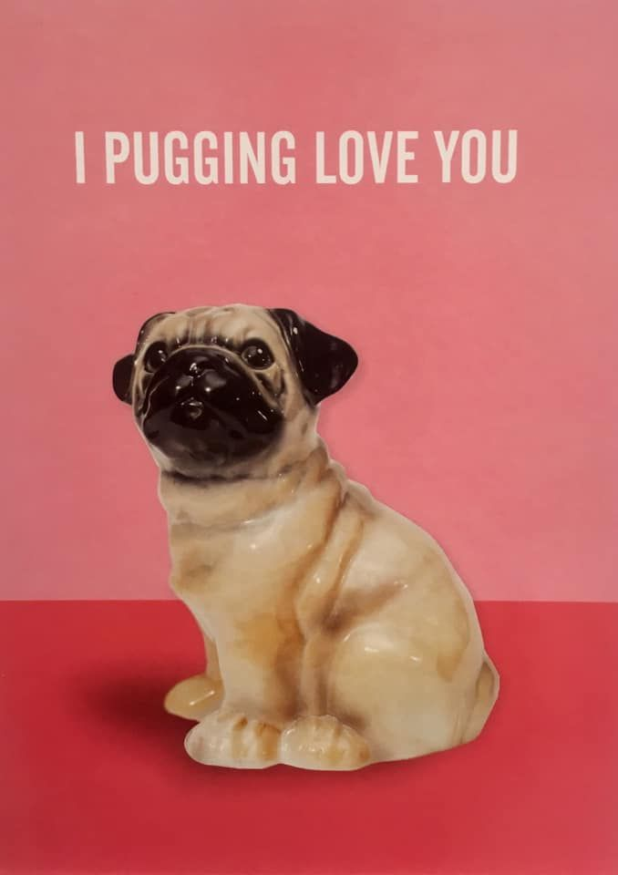 Pug Blank Card Available At Www Ilovepugs Co Uk Post Worldwide