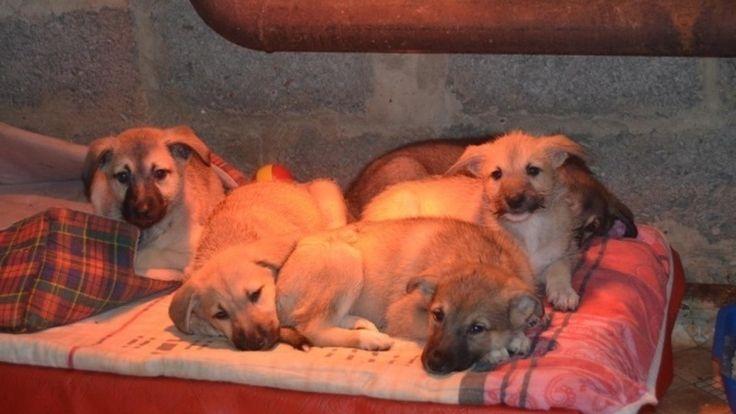 Petition update · Приют для животных создан! · Change.org