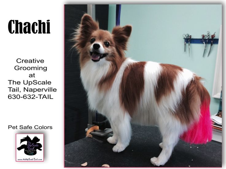 44 best creative color dog grooming images on pinterest grooming at the upscale tail naperville il 630 632 8245 solutioingenieria Choice Image