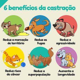 CASTRAÇÃO GRÁTIS - para Cães e Gatos em SP - Não perca!!!  http://miadosnaweb.blogspot.com.br/2017/05/castracao-gratis-nao-perca-o-mutirao-em.html
