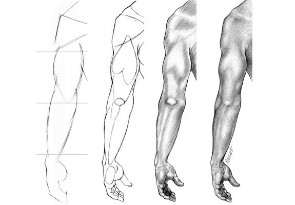 Drawspace.com - Lessons - U04: View of an Adult Arm