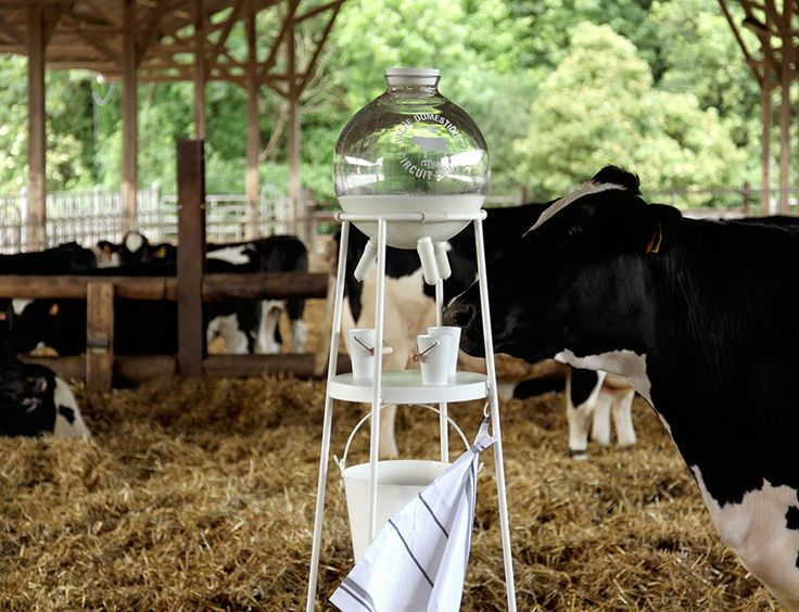 5.5 design studio's vache à lait reconnects dairy consumers and producers