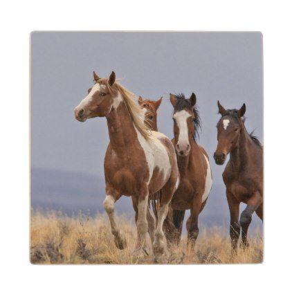 Wild Mustangs Wooden Coaster -nature diy customize sprecial design