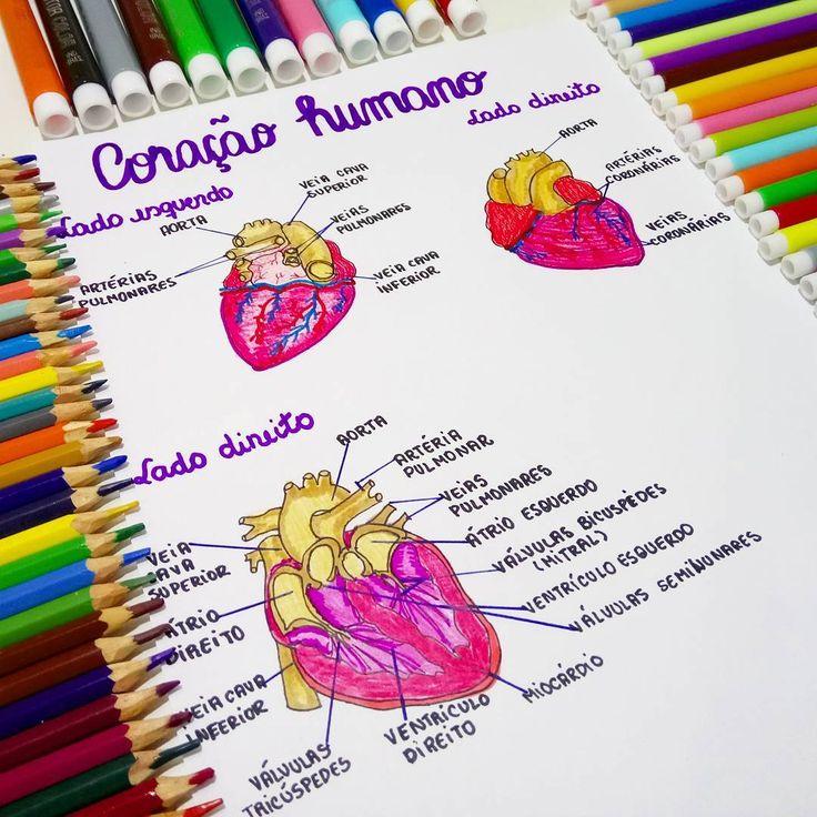 """1,015 curtidas, 15 comentários - Médica Leitora (@medicaleitora) no Instagram: """"Resumo sobre coração humano. Como é fascinante descobrir cada estrutura do nosso corpo... Ótimo dia…"""""""