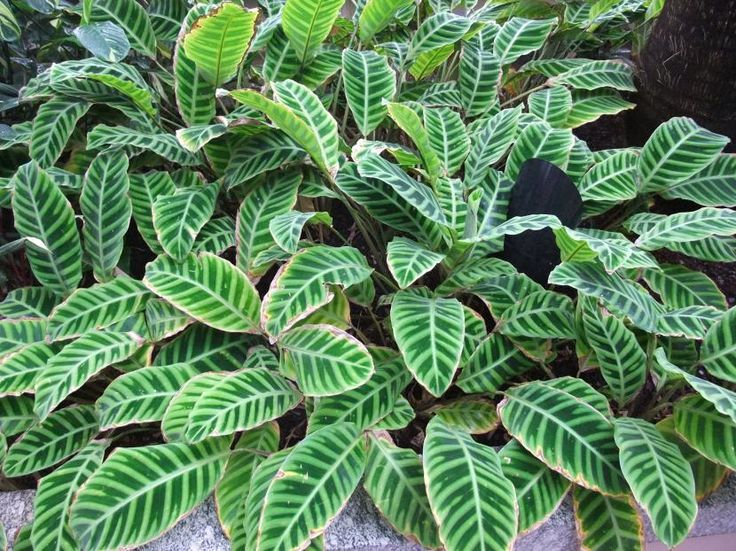 Plantas de interior resistentes, aptas para principiantes