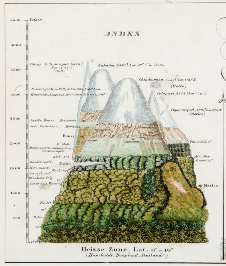 H. Berghaus, ed. Vegetation zones in the Andes, detail of a plate from Physikalischer Atlas oder Samlung von Karten. 5 vol. 1849-1851. Published as a supplement to Alexander Humboldt's Kosmos. 5 vol. 1845-1862.