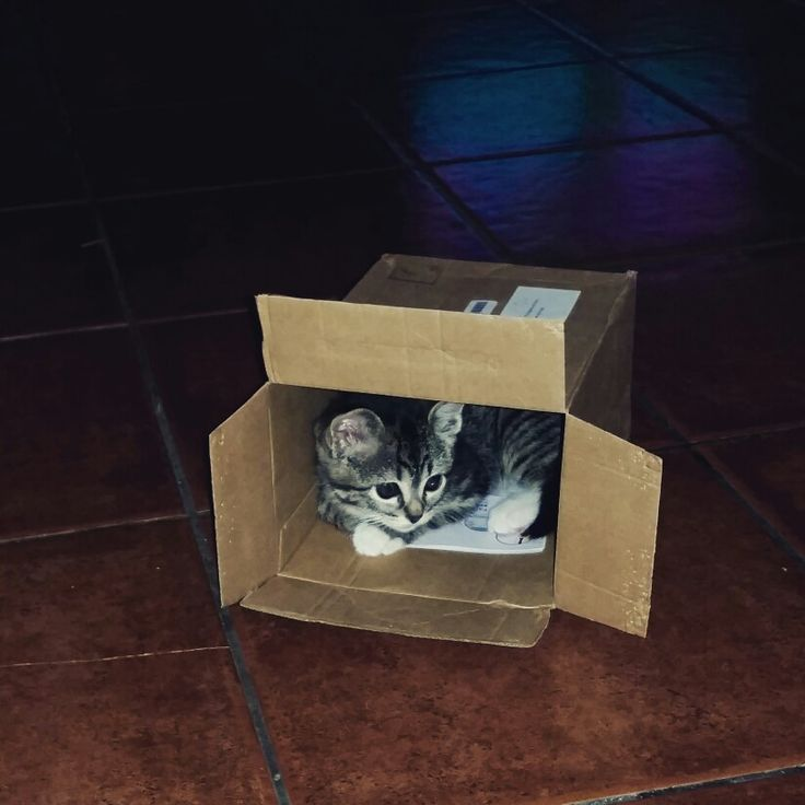 Lovely cat in a box