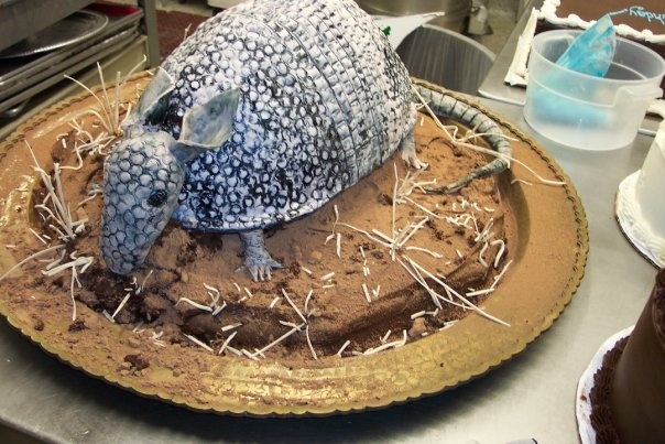 how to make an armadillo