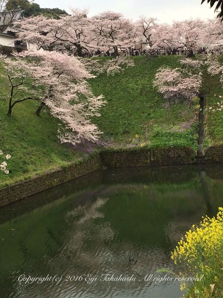Sakura imperial palace on Water Songも世界110ヶ国以上に配信中Click to:https://sites.google.com/site/takahashicleaning7/ 購入はこちらからBuy Song Now 皇居の桜