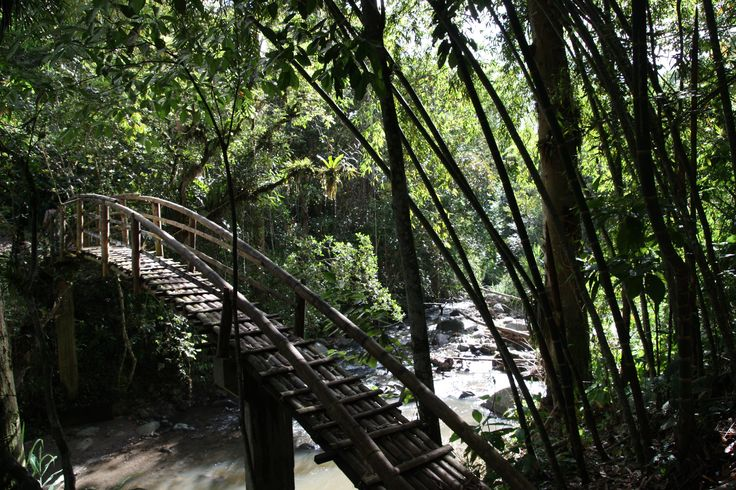 During the treck to see the different sites you pass through really beautiful places, like this bamboo bridge.