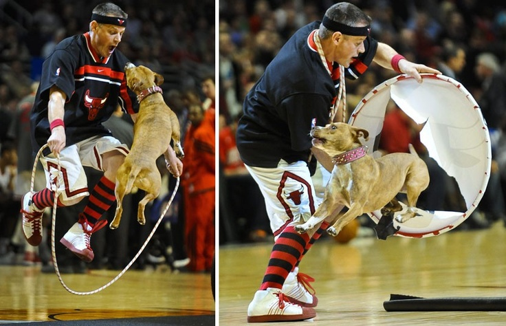 Jim Jensen performs tricks with his dog Junebug during a timeout in the first half of the Chicago Bulls and Orlando Magic NBA game at the United Centre in Chicago, IllinoisPicture: EPA/TANNEN MAURY