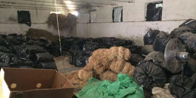 Pas sekuestrimit të 11.6 ton kanabis në Përmet, vazhdojnë hetimet