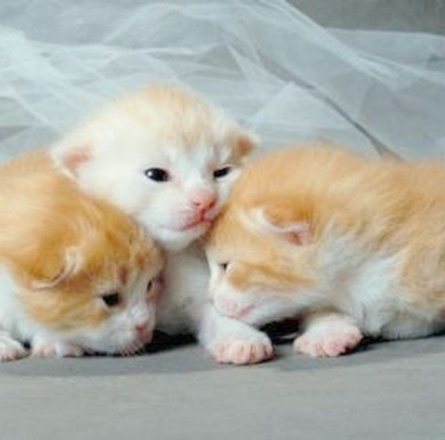 What I M Prettier Than Your Decorations Newborn Kittens Cat Fleas Baby Kittens