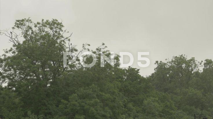 4k Brids Crows in Trees During Massive Rain Storm Winter - Stock Footage   by RyanJonesFilms