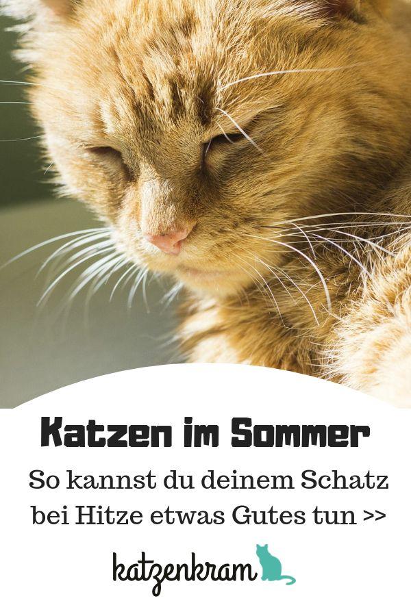 Katzen im Sommer – Tipps zur Abkühlung
