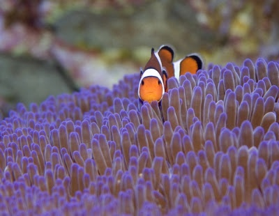 Top 10 Most Beautiful Reefs in the World | Favorite Places ...  Top 10 Most Bea...