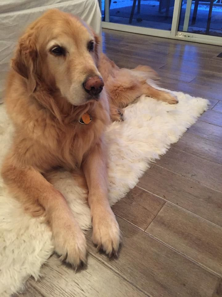 We found another fan of our  Alpaca Suri rugs - thanks Léo!!!