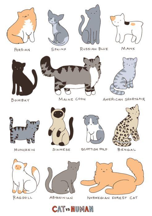 good cat illustrations!