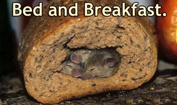 Bed and breakfast.