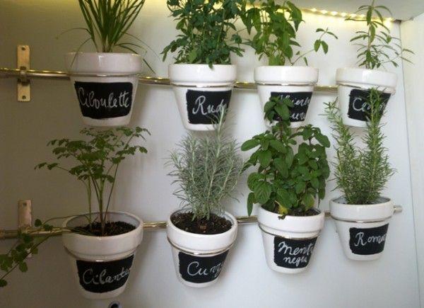 ECO-IDEAS Y RECICLAJE : Consejos para cultivar hierbas aromáticas en el ho...