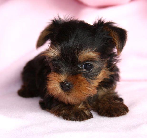 lil baby  puppy