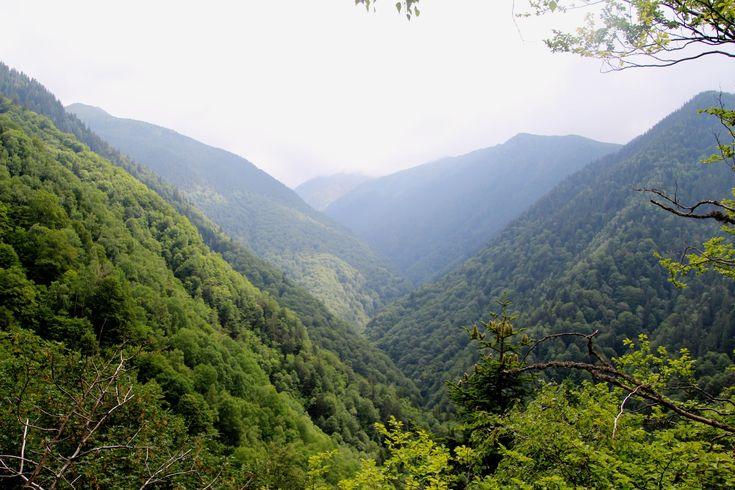 petition rumänien  rettet die letzten großen urwälder