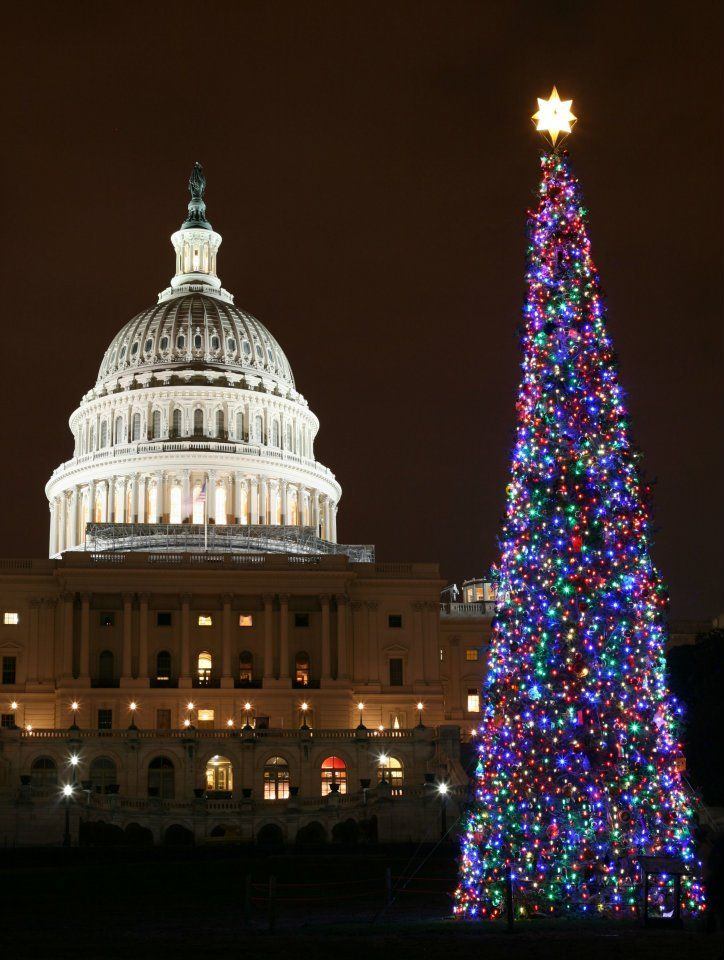 National Christmas Tree Washington, DC | Neat Stuff ...