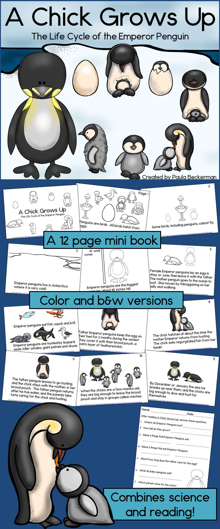 Your students will love learning about the life cycle of the largest penguin species with this fun science reader! Facts are presented simply, with beautiful graphics. TpT $