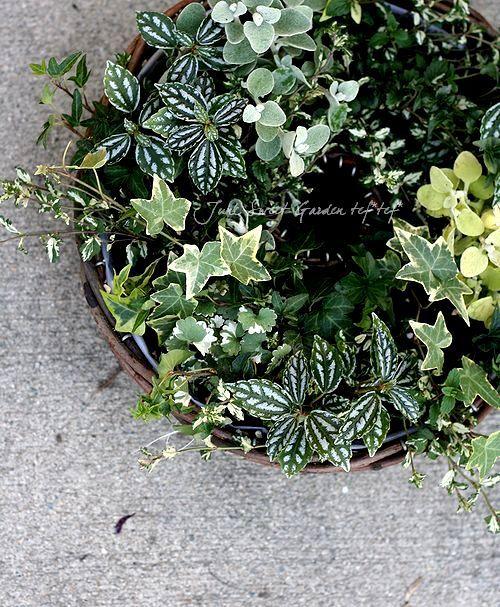 寄せ植え   大人可愛いワンランク上のガーデニングを❤ Junk sweet Garden tef*tef*