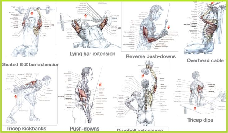 1000+ images about Arm Workouts on Pinterest