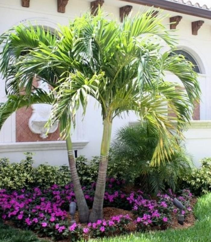 45 Awesome Florida Landscaping With Palm Trees Ideas Front Yard