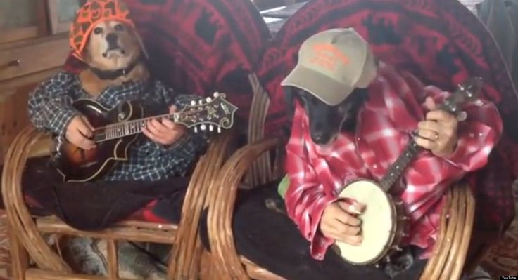 these two dogs playing a bluegrass duet will make you smile music funny dogs two dogs banjo. Black Bedroom Furniture Sets. Home Design Ideas