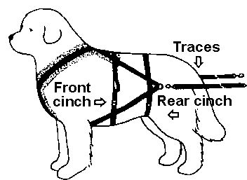 Carting Dog harness, Your dog, Harness