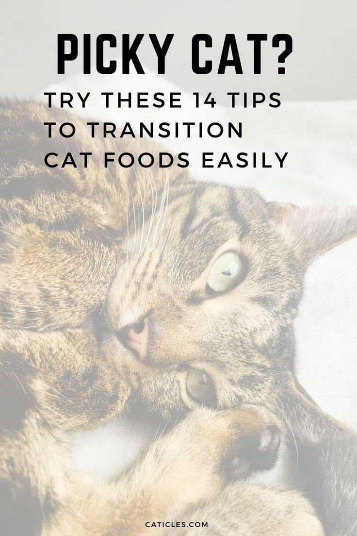 How to Transition Cat Food the Right Way Guide