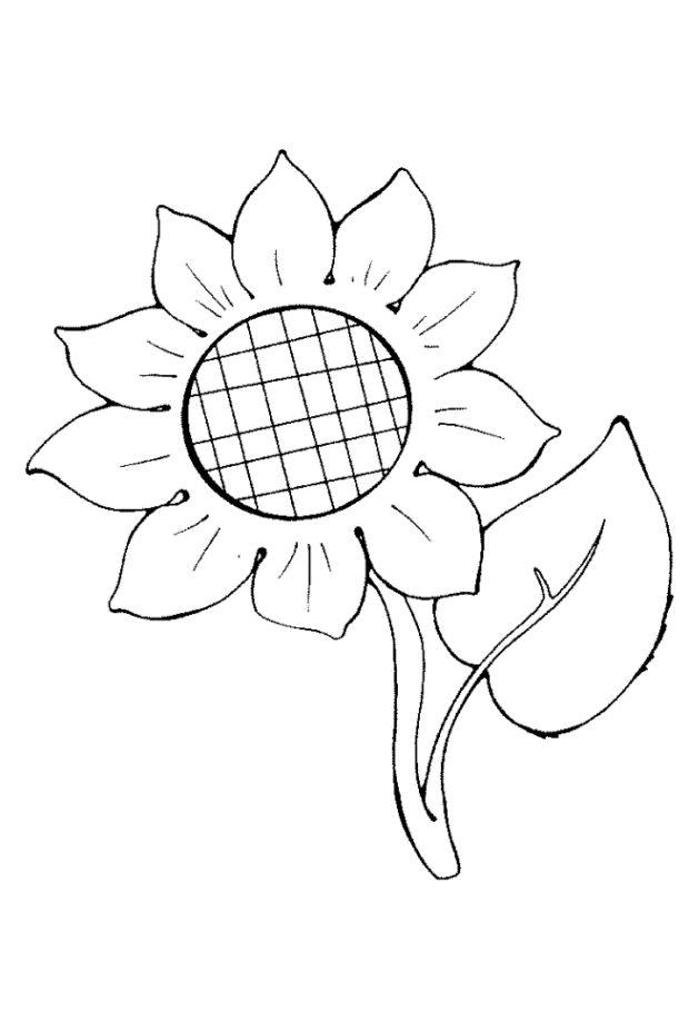 ausmalbilder zum ausdrucken sonnenblumen httpwww