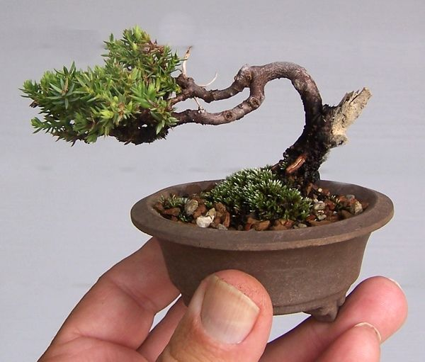 It's on my to-do list to make a couple of these micro bonsai