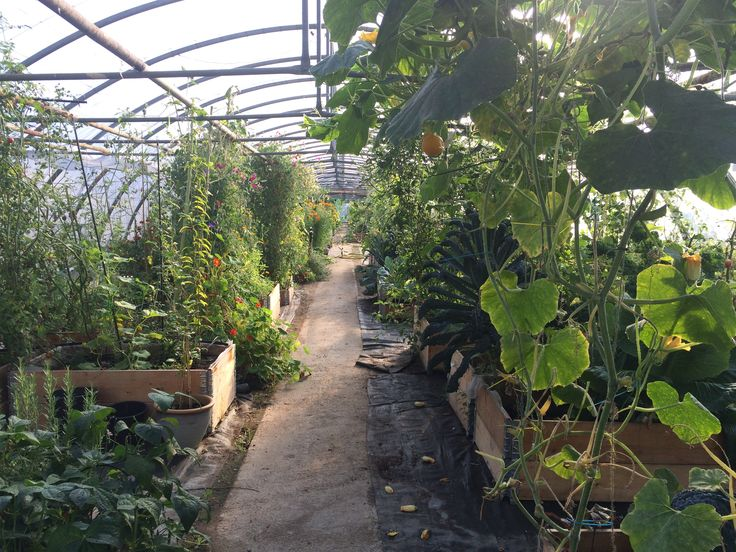 Urban Farming. Fællesgartneriet Denmark