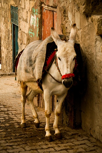 The narrow streets of Mardin accommodate this form of transport over the four wheel variety, Turkey