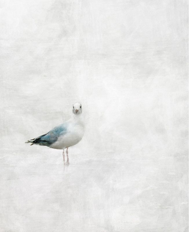 Gull by Agat&Marek available as T-Shirts & Hoodies, Men's Apparels, Stickers, iPhone Cases, Samsung Galaxy Cases, Posters, Home Decors, Tote Bags, Pouches, Prints, Cards, Mini Skirts, iPad Cases, Laptop Skins, Drawstring Bags, Laptop Sleeves, and Stationeries
