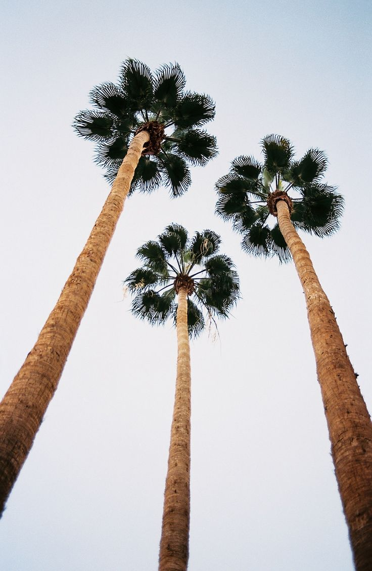 Iphone 6 wallpaper tumblr palm trees - Dreaming Of Summer Image Via Natalee Ranii Dropcho
