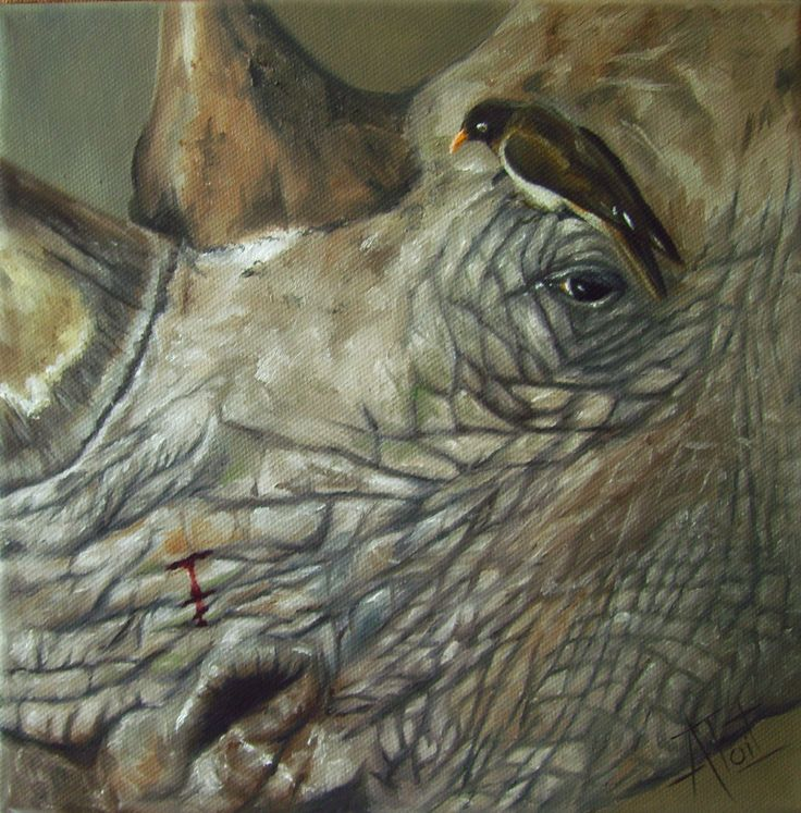 Rhino Oil on canvas 25cm x 25cm SOLD