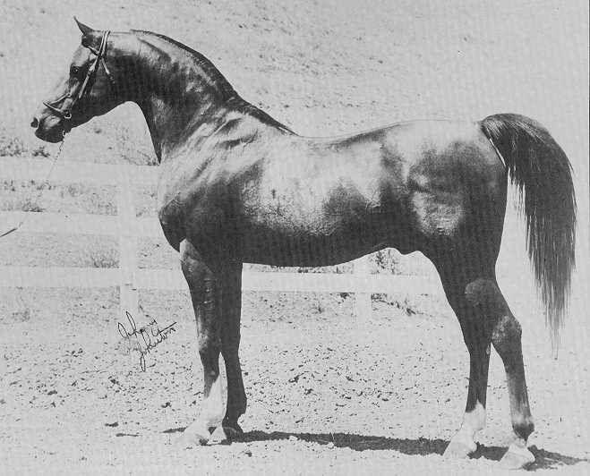 Oltre 25 fantastiche idee su cavalli arabi su pinterest for Immagini cavalli stilizzati