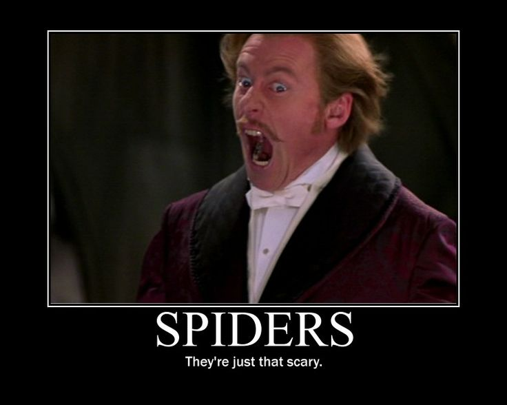 Giant scary spiders memes - photo#26